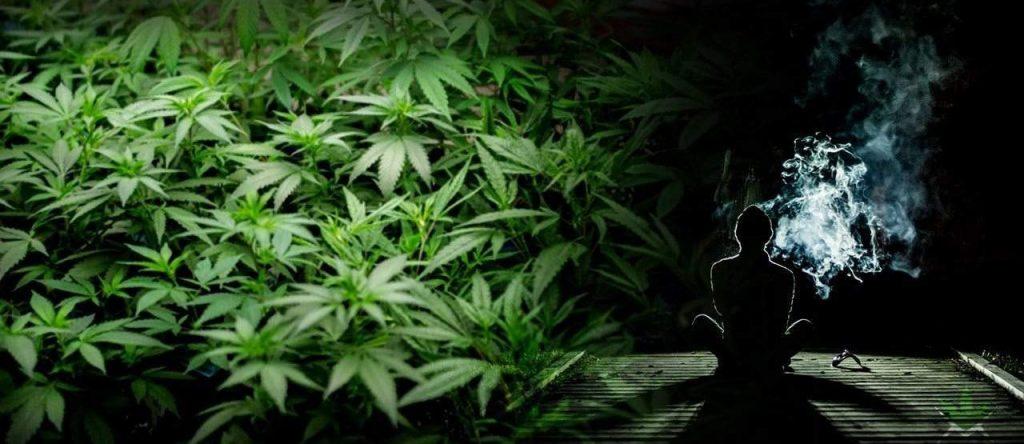 Waporyzacja medycznej marihuany w świetle badań cz. 2 – Zagrożenia