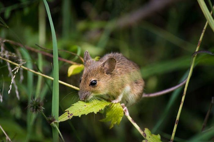 Ochrona outdoorowych roślin przed ssakami i gryzoniami